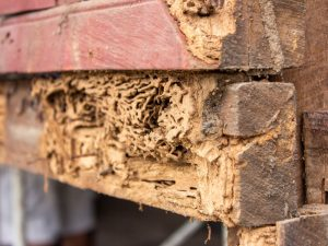 Termites invade home in San Angelo
