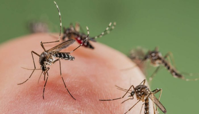 Mosquito infestation in San Angelo, TX